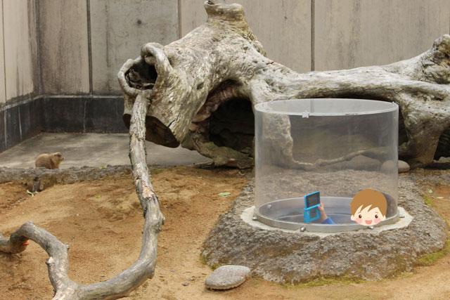 いしかわ動物園のプレーリードッグ