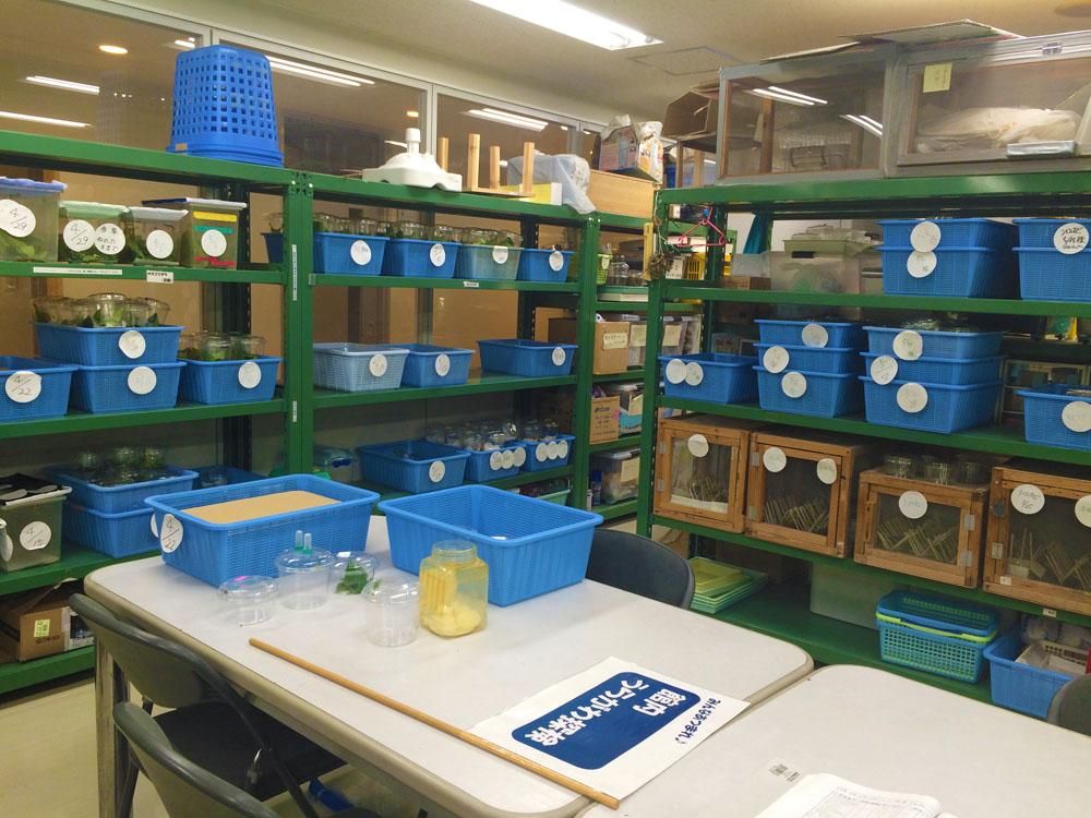 石川県ふれあい昆虫館飼育室