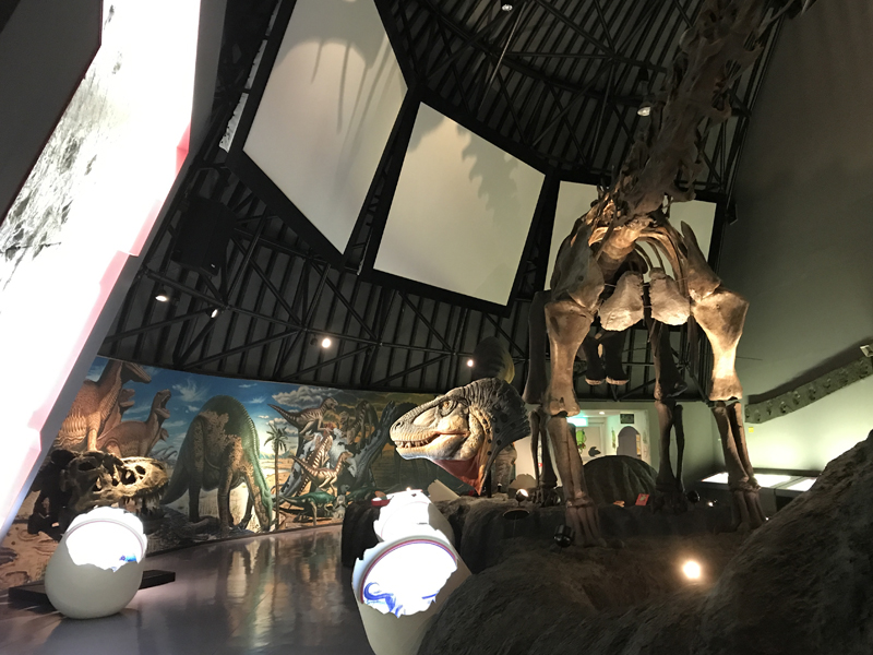 白山恐竜パーク白峰内部