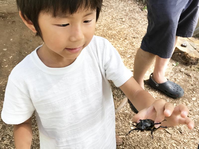 石川県ふれあい昆虫館カブトムシ